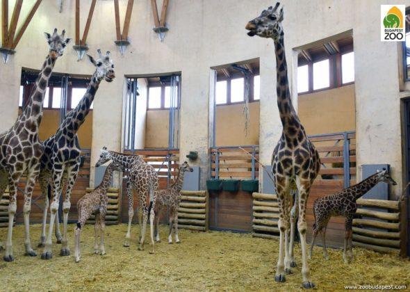 zoo a budapest